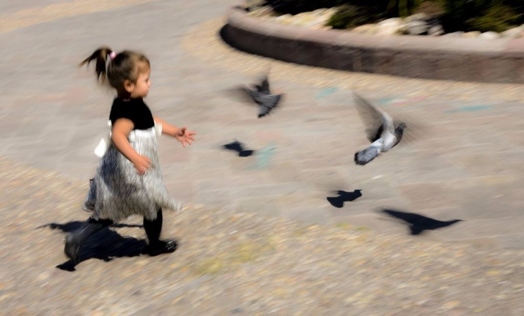 child Chasing Pigeons