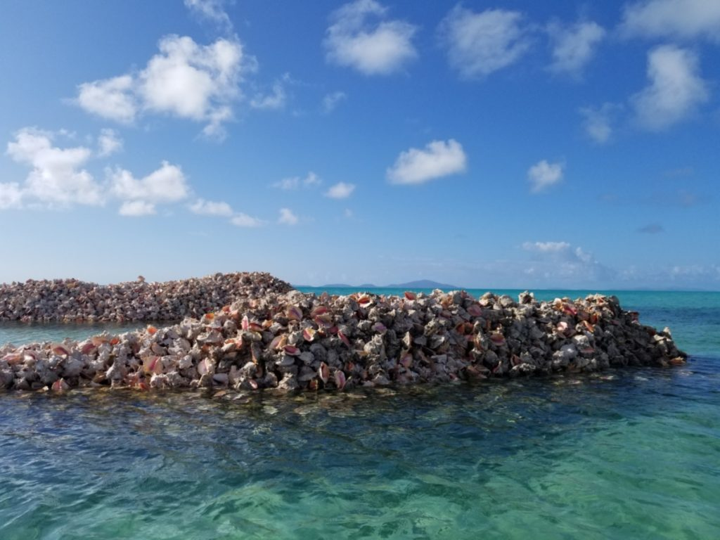 Amerinidian conch mounds