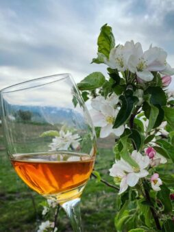 Cider glass and blossoms